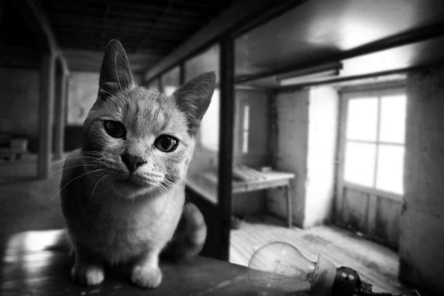 gato-miron